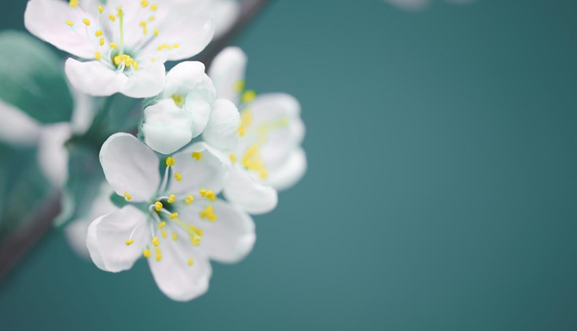 Vacker vårblomning